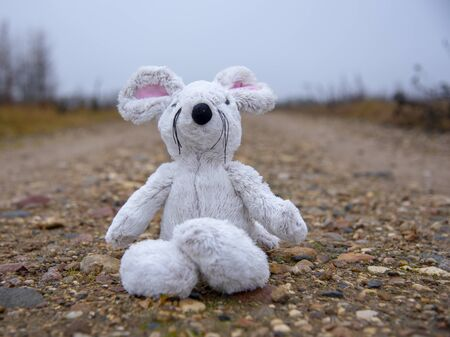 Toy soft mouse sits on a country road wet against the background of autumn misty forest.