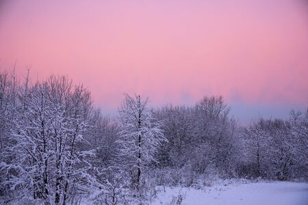 Bright pink-purple dawn over a snow-covered Park in the early morning.