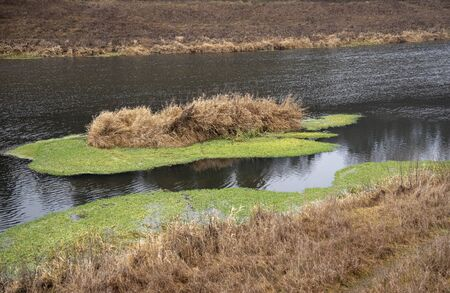 A small island with dry grass, surrounded by bright green mud, in the middle of the river.