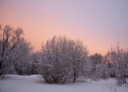 Snow-covered Park on the background of a gentle dawn in the early winter morning.