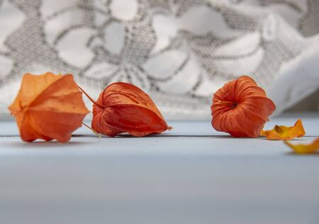 Bright orange physalis and dry rose petals on a blue table top against a lace curtain. 版權商用圖片