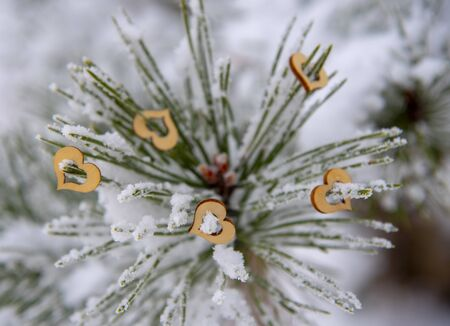 Wooden hearts on snow-covered pine branches on a blurred background. Selective focus. Banco de Imagens