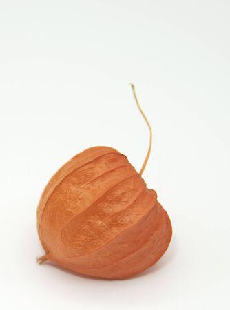 One bright orange fruit of physalis on a white background. 版權商用圖片
