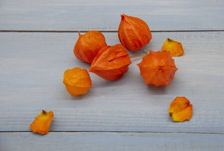Bright orange physalis and dry rose petals on a blue tabletop