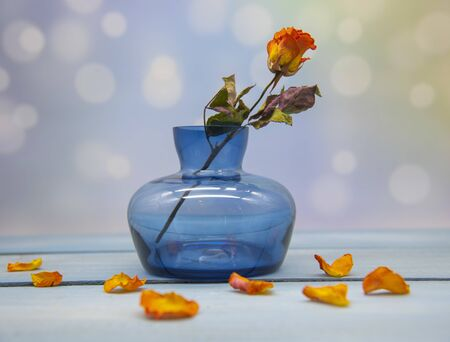 One dried rose in a blue glass vase and bright orange petals all around. Composition on a blue tabletop on a blurred background.