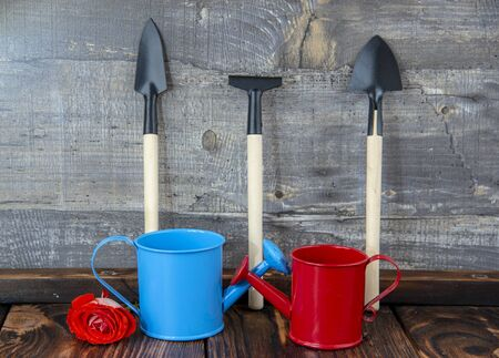 Garden tools, shovels, rakes and watering cans, stand against the gray wooden wall.