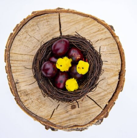 Nest with colored quail eggs and small yellow Chicks on a wooden background. Easter card . The view from the top.