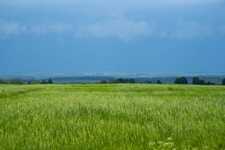 Bright summer landscape. Lush green grass and blue sky with clouds. Foto de archivo - 149591031
