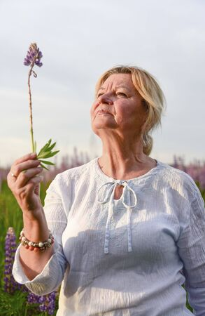 An elderly woman holds a Lupin in her hands and looks at it. Summer landscape.