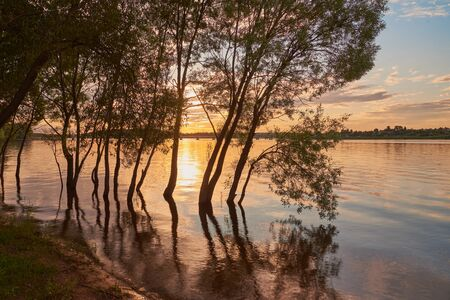 A magnificent sunset over the lake was photographed through the trees. summer evening landscape. 版權商用圖片
