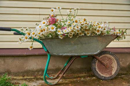 A garden wheelbarrow full of wild flowers .
