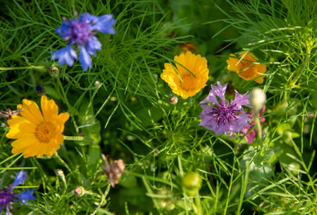 Full frame green foliage and bright multi-colored summer flowers with selective focus. Copy space for text, design. Flower background.