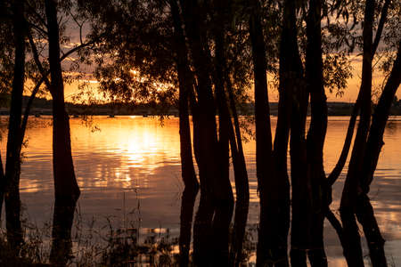Dark silhouettes of trees against the  of the lake, which reflects the Golden sunset.