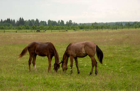 Two young foals graze in a green field.