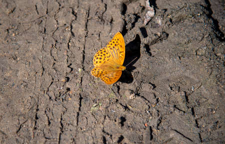 A bright orange butterfly sits on the bare ground. Archivio Fotografico