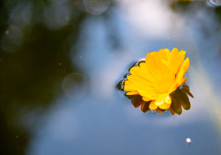 One bright yellow marigold flower lies on the surface of the water, reflected in it.