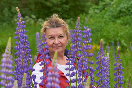 A Mature woman poses in a Lupin field. Standard-Bild