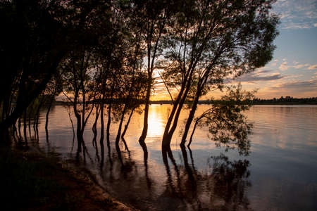 Black silhouettes of trees growing out of the water against the background of a bright sunset.