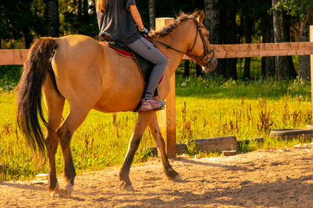 The girl is sitting on a brown horse.Training in the arena. Archivio Fotografico