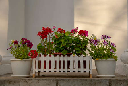 White pots with bright flowers as the decor of an old building. Stockfoto