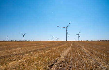 Many wind turbines stand in a mown field against a clear blue sky.