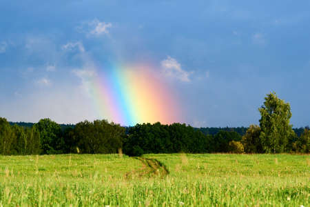 Bright rainbow column over a green field and forest. Rainbow after the rain. Summer landscape.