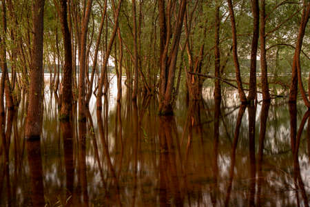 Thin tree trunks are reflected in the water.