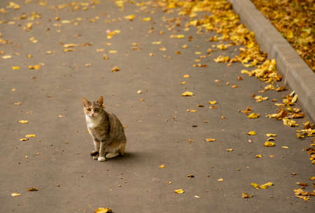 A lone stray cat sits on an asphalt road strewn with yellow autumn leaves.