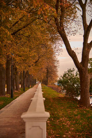 An alley strewn with leaves in an autumn Park. Focus on the middle plan.