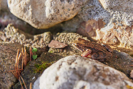A frog, Slightly blurred in the sunlight, sits on light-colored rocks.