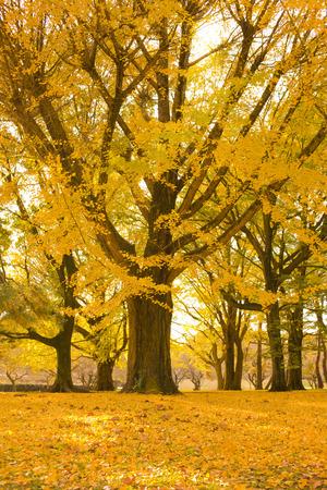 Autumn park tree