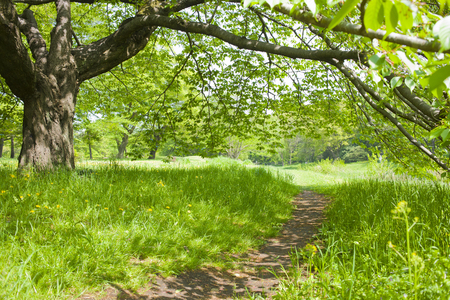 walking paths: Sunny park