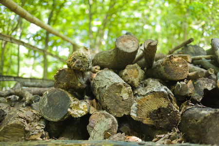 walking paths: Forest firewood Stock Photo