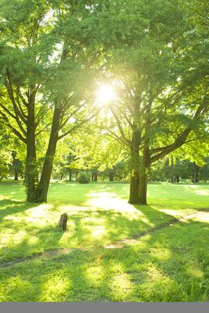 公園日光 写真素材