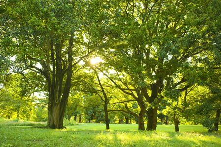 poranny park