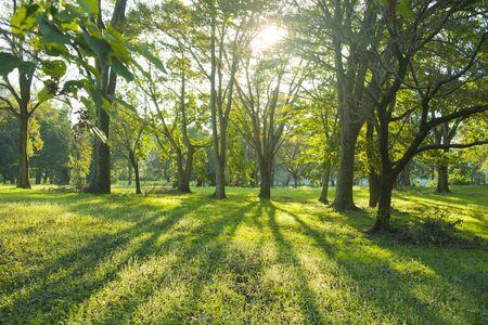 Morgen Wald Standard-Bild