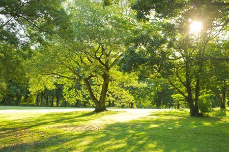 giardino mattutino Archivio Fotografico