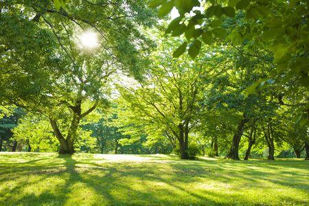 grüner Park