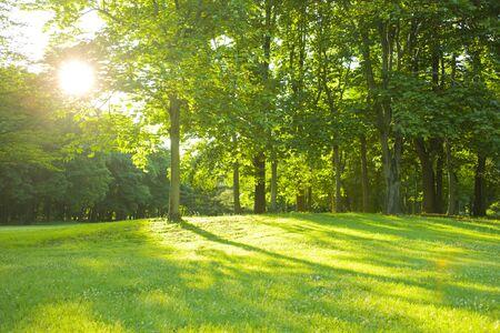 morning park