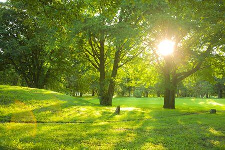 sunshine park Archivio Fotografico