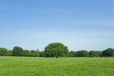 Green Park 免版税图像