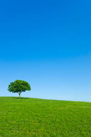 Hill Tree