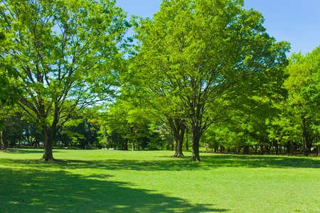 Green Park Stockfoto