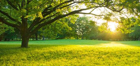 sunshine tree