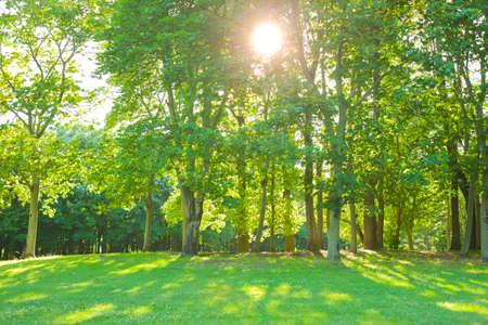 morning forest Stockfoto