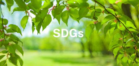 Banner image of SDGs