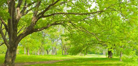 Garden Tree Stockfoto