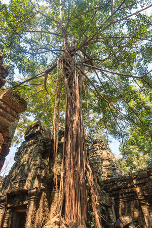 ta: Ancient gallery of amazing Ta Prohm temple overgrown with trees. Mysterious ruins of Ta Prohm nestled among rainforest in Angkor, Siem Reap, Cambodia. Ta Prohm is also known as Tomb Raider