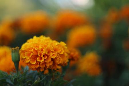 haifa: Field of flowers, Haifa, Israel