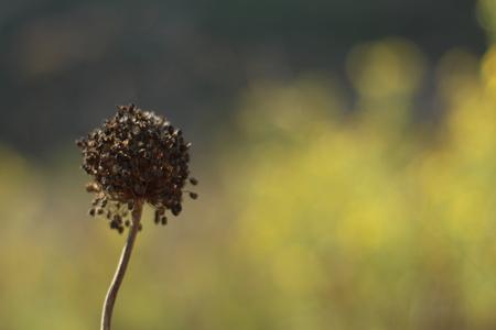 carmel: Flor muerta, bosque Carmel, Israel